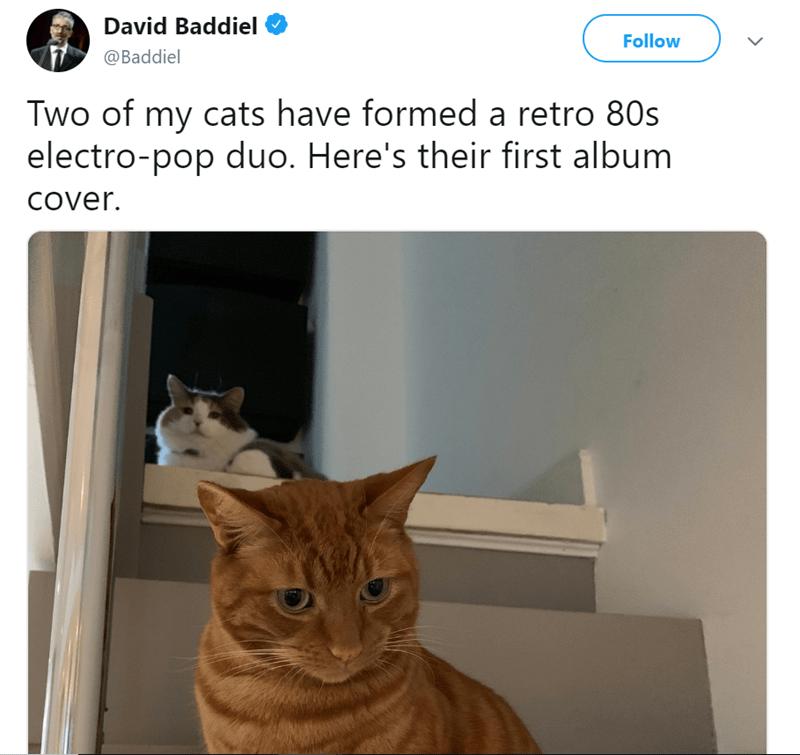 animal photos pets album covers - 7619845