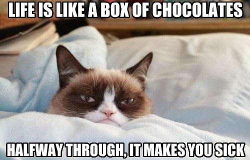 Grumpy Cat life chocolate funny - 7620179200