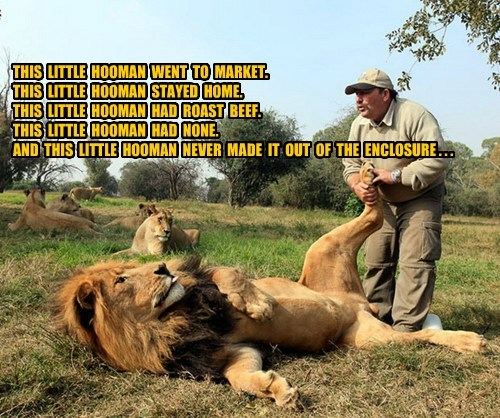 little pigs nom tasty lion funny - 7620444160