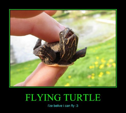 FLYING TURTLE i'ze belive i can fly :3