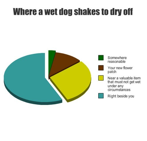 pie charts dogs graphs funny - 7620857344