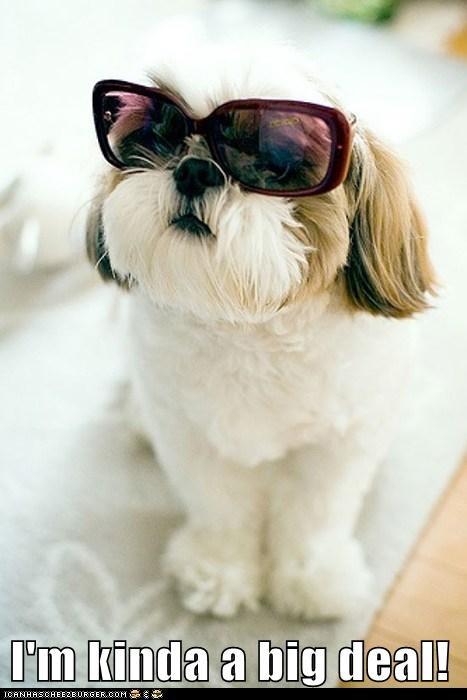 bossy,shades,Big Deal,funny