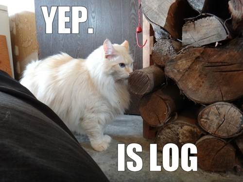 log,curious,funny