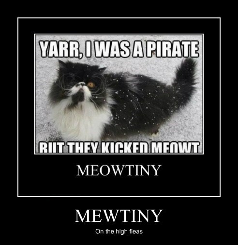 cat puns pirates meow funny - 7622211072