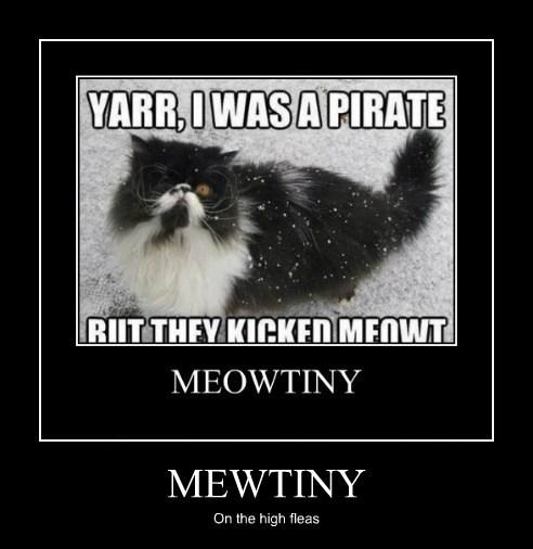 cat puns pirates meow funny - 7622211072