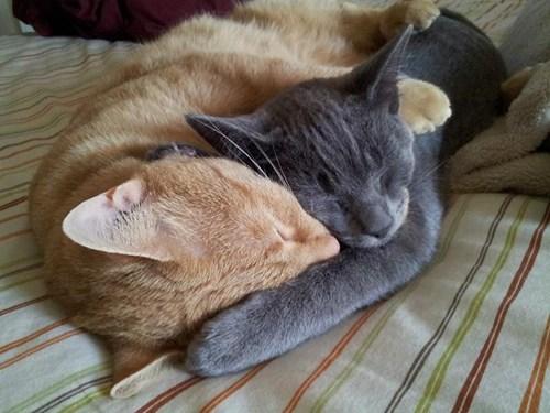 pets cuddles Cats - 7622289152