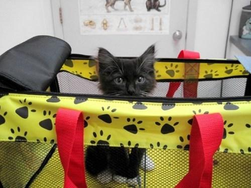 kitten veterinarian funny - 7622450432