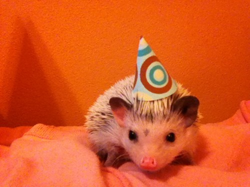 birthday Party hedgehog hat - 7622502656