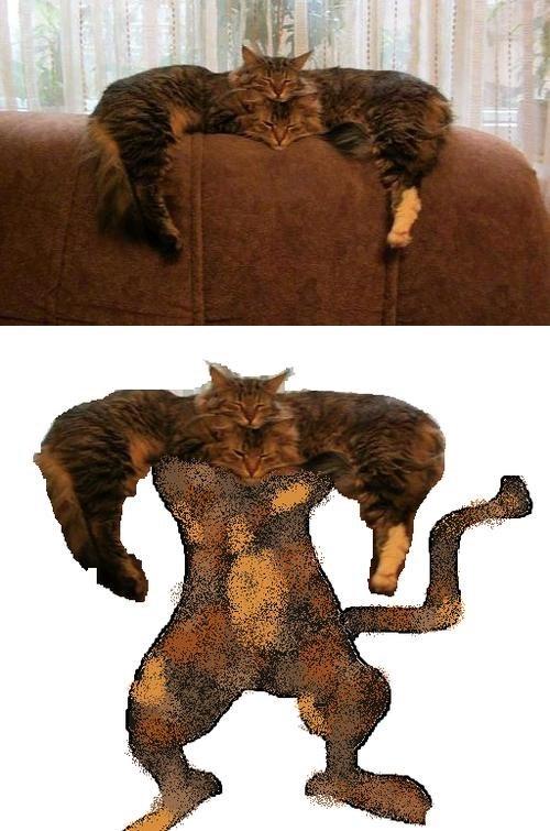 cat nap Super funny