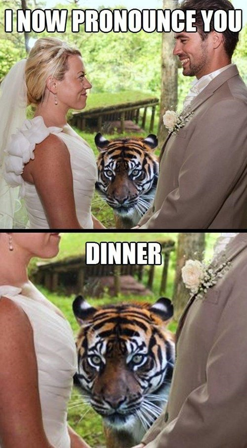 bride,groom,tigers,wedding,funny