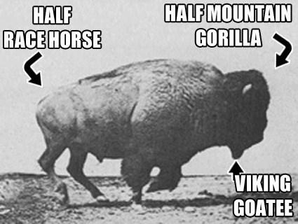 anatomy,Badass,buffalo,funny
