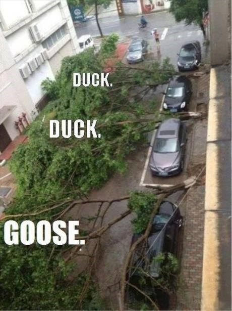 trees duck duck goose cars - 7623015680