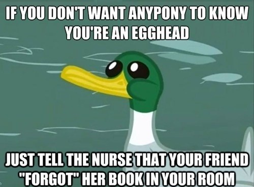ponified friendly advice duck advice animals - 7623990272