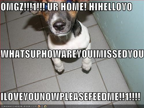 excited happy hungry jack russel terrier - 762415360