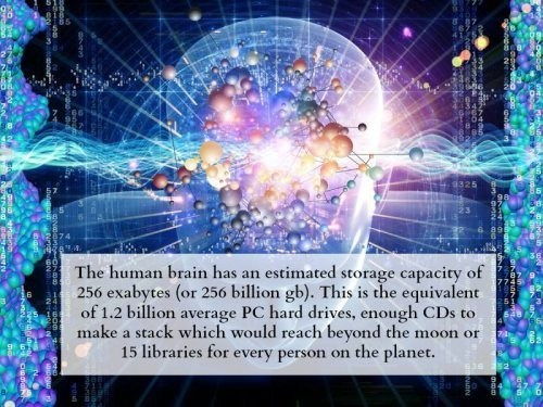 humans computer brain funny - 7624400896
