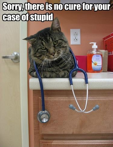 funny dr tinycat stupidity - 7624910848