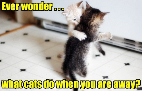 Ever wonder . . . what cats do when you are away?