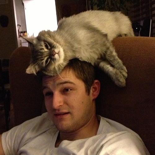 cat miss human - 7625165824