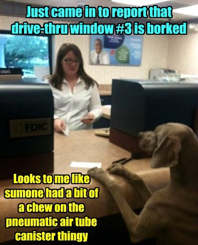 bank,drive thru,chewing,dogs,funny