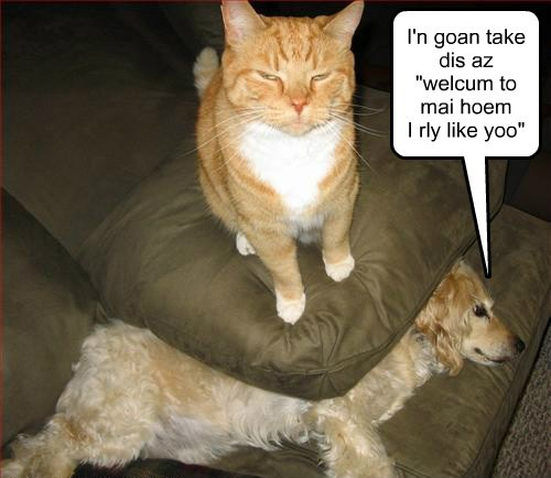 optimist dogs welcome Cats funny - 7625269248