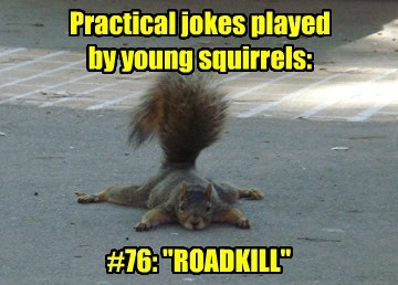 "Practical jokes played by young squirrels: #76: ""ROADKILL"""