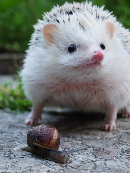 snails friends hedgehogs food - 7625622784