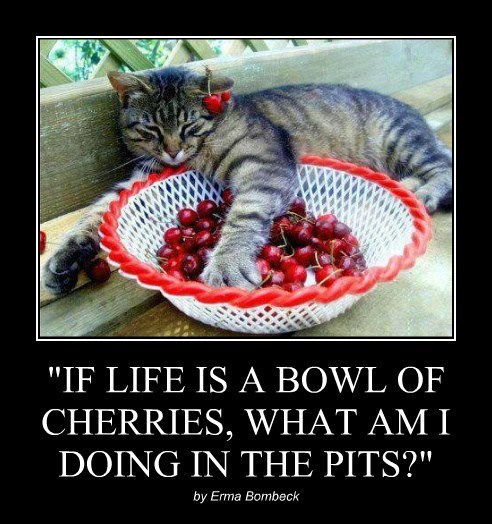 """""""IF LIFE IS A BOWL OF CHERRIES, WHAT AM I DOING IN THE PITS?"""""""