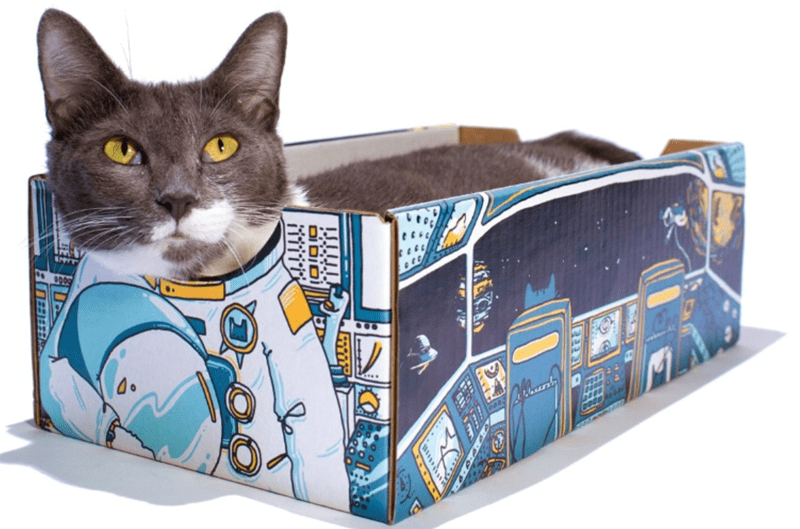 box design cardboard box Cats cardboard - 7625733