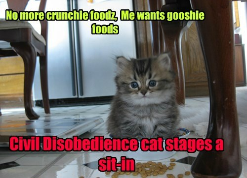 sit in,Protest,civil disobedience,food,funny