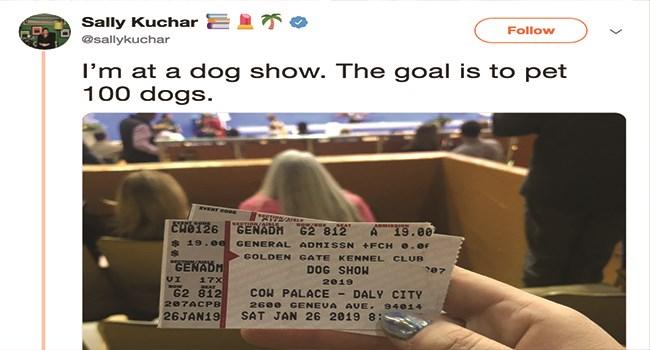 pups dogs good girls good boys cute doggo dog show - 7625989