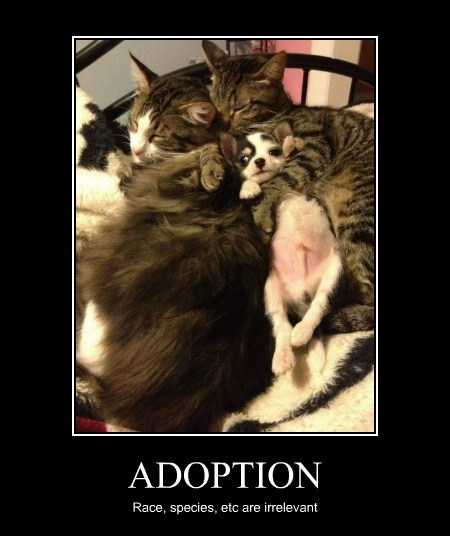 dogs adoption cute sleep Cats - 7626089472