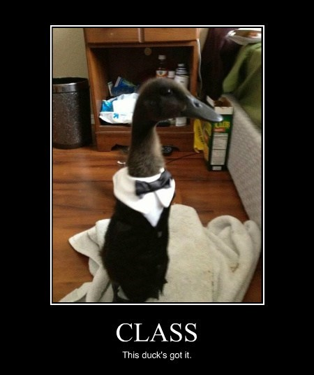 CLASS This duck's got it.