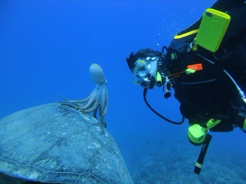 diving,scuba,photography,funny,animals,g rated,win