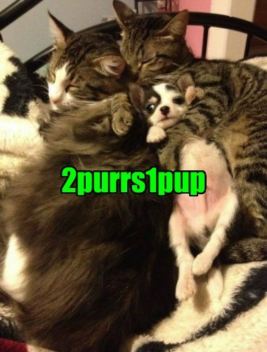 2girls1cup infamous dogs cuddle Cats funny - 7626276608