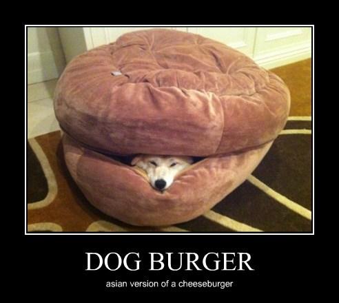 Cheezburger Image 7627637504