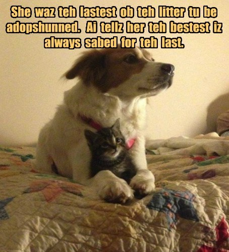 dogs,adoption,cute,Cats