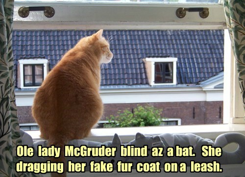 blind laughing Cats funny - 7627659776