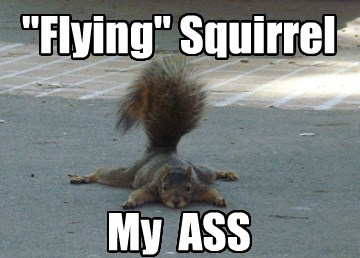 funny,flying squirrel