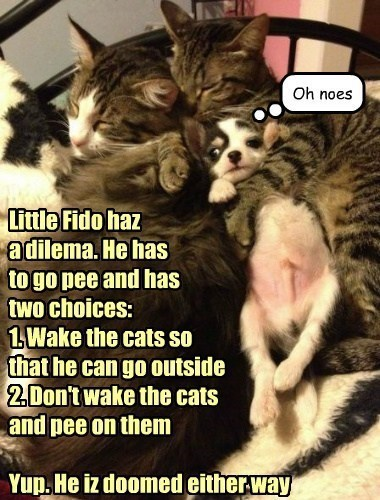 Little Fido haz a dilema. He has to go pee and has two choices: 1. Wake the cats so that he can go outside 2. Don't wake the cats and pee on them Yup. He iz doomed either way Oh noes Chech1965 030713