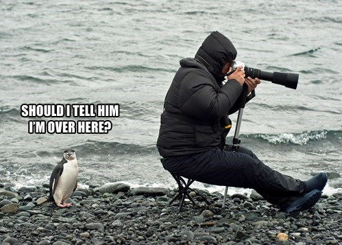 penguin,funny,photographer