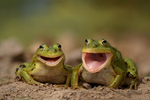 singing,frogs