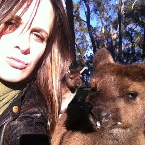 photobomb kangaroos funny - 7628523008