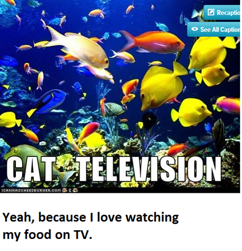 aquarium food fish Cats television - 7628534272