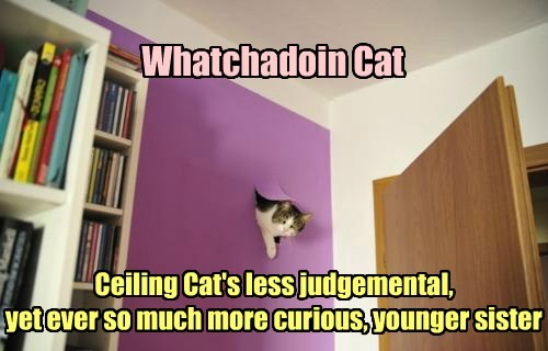 whatcha doin curiousity ceiling cat funny