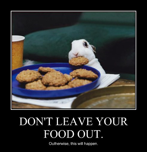 DON'T LEAVE YOUR FOOD OUT. Outherwise, this will happen.