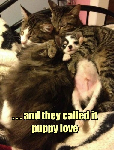 . . . and they called it puppy love