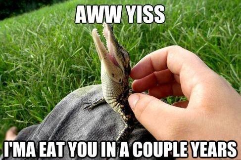 eating funny aligator - 7628915712