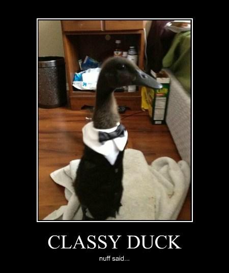 CLASSY DUCK nuff said...