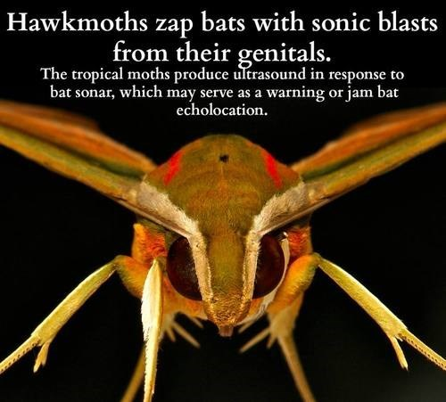 facts moths science funny - 7629250560