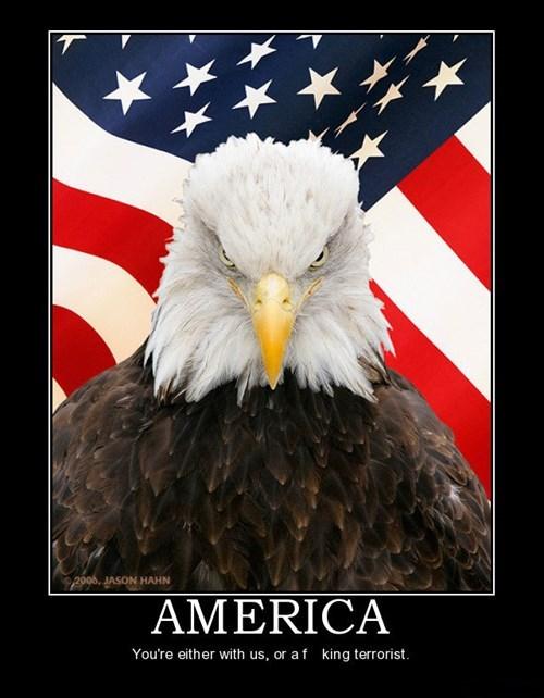 america funny bald eagle - 7629338112